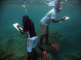 UVC Solomon Islands