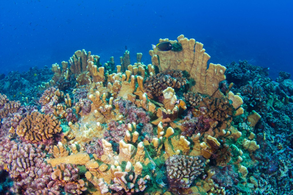 Récifs coralliens du Pacifique