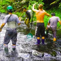 Workshop - tropical eels