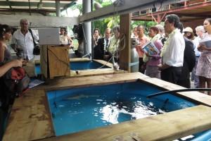 Manon explique les expériences faites sur les aptitudes physiologiques des requins dans le contexte du changement climatique