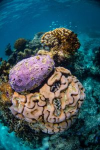 thiault_coral_28_compr